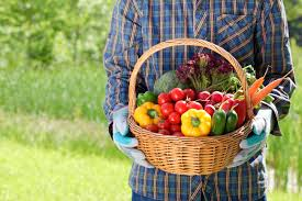 garden produce in basket