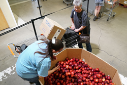 Food Bank client selects produce.